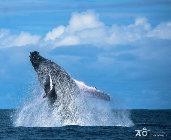 Bahia Azul Hotel Uvita Costa Rica Whale watching tou